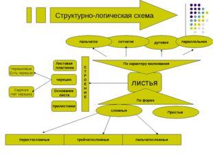 Структурно-логическая схема листья дуговое Простые По форме параллельное слож