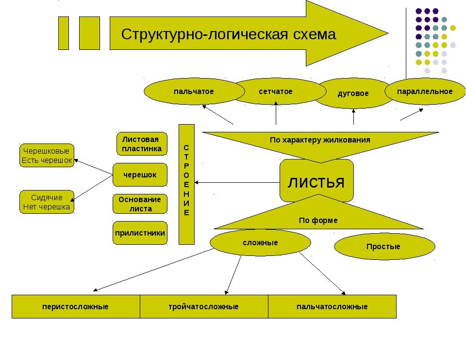 Структурно-логическая схема листья дуговое Простые По форме параллельное слож...
