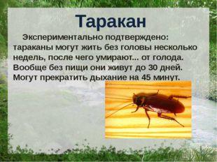 Таракан Экспериментально подтверждено: тараканы могут жить без головы нескол