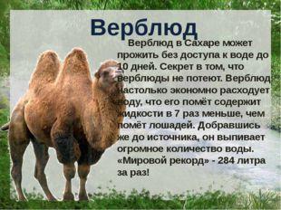 Верблюд Верблюд в Сахаре может прожить без доступа к воде до 10 дней. Секрет