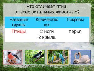 Что отличает птиц от всех остальных животных? Название группы Количество ног