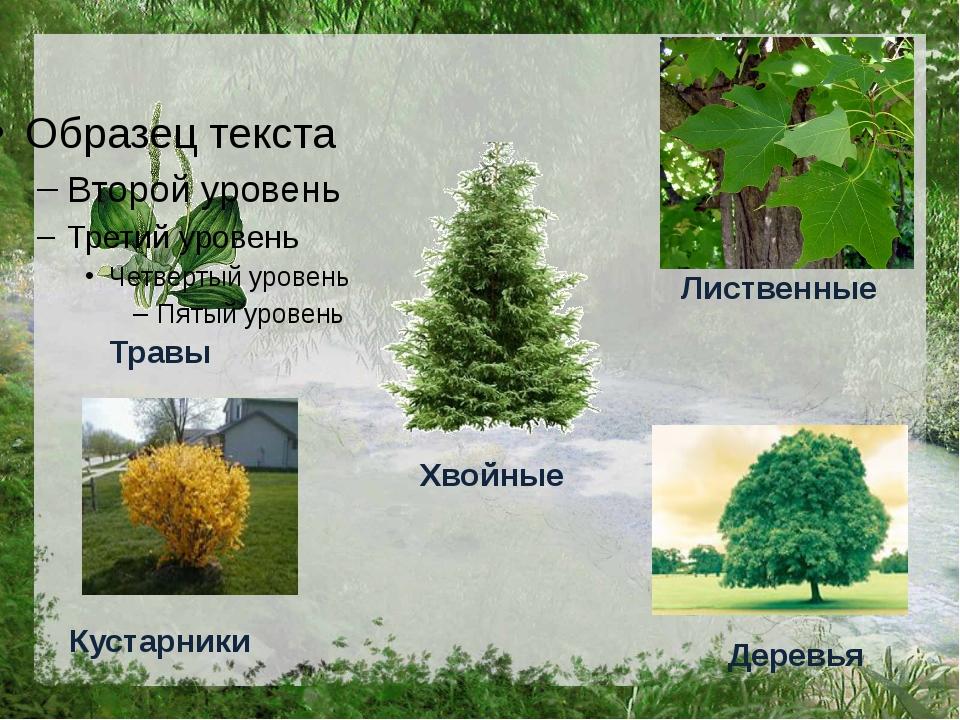 Хвойные Деревья Кустарники Травы Лиственные