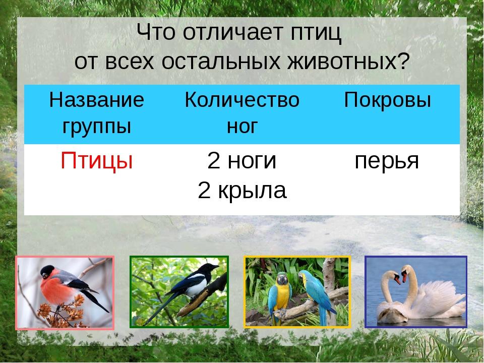 Что отличает птиц от всех остальных животных? Название группы Количество ног...