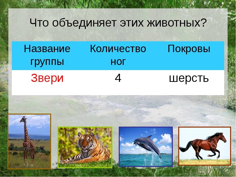 Что объединяет этих животных? Название группы Количество ног Покровы Звери 4...