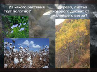 Из какого растения ткут полотно? Дерево, листья которого дрожат от малейшего