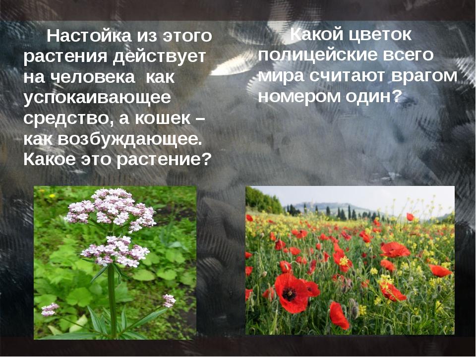 Настойка из этого растения действует на человека как успокаивающее средство,...