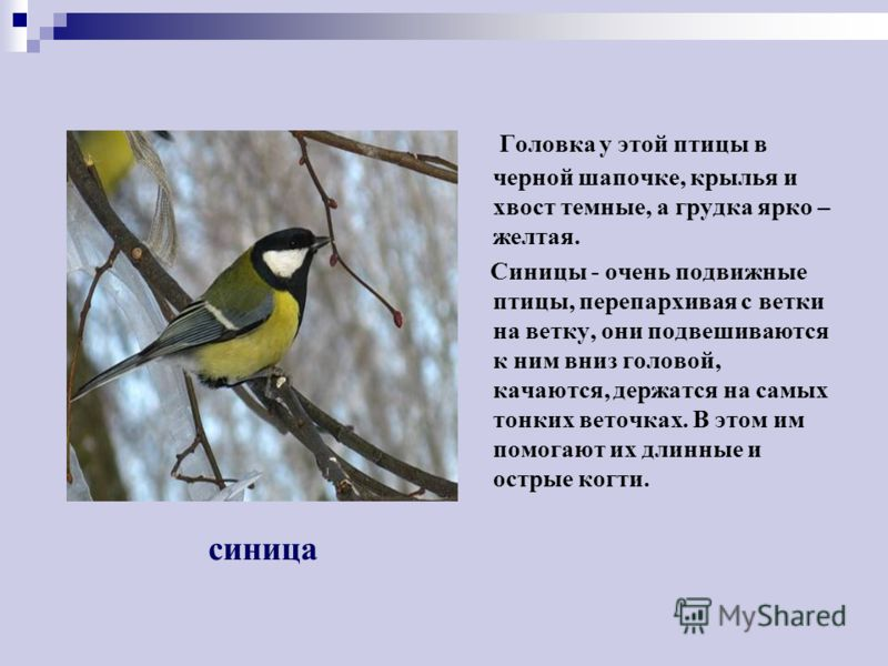 http://images.myshared.ru/379053/slide_13.jpg