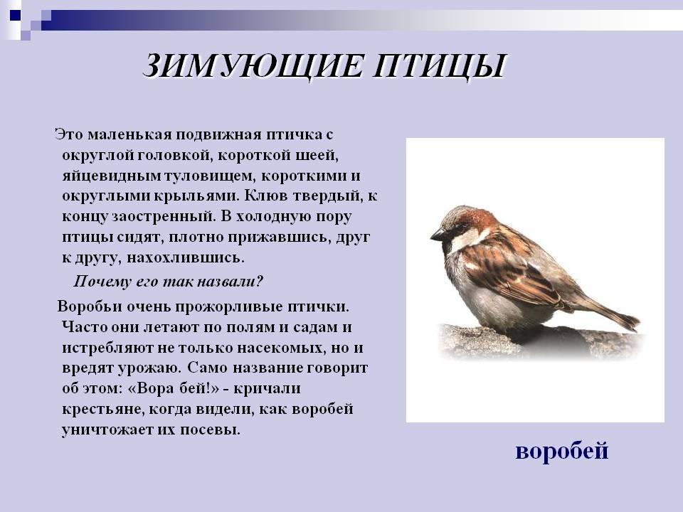 Презентация на тему Презентация по развитию речи класс УМК  Сочинение описание птицы 3 класс
