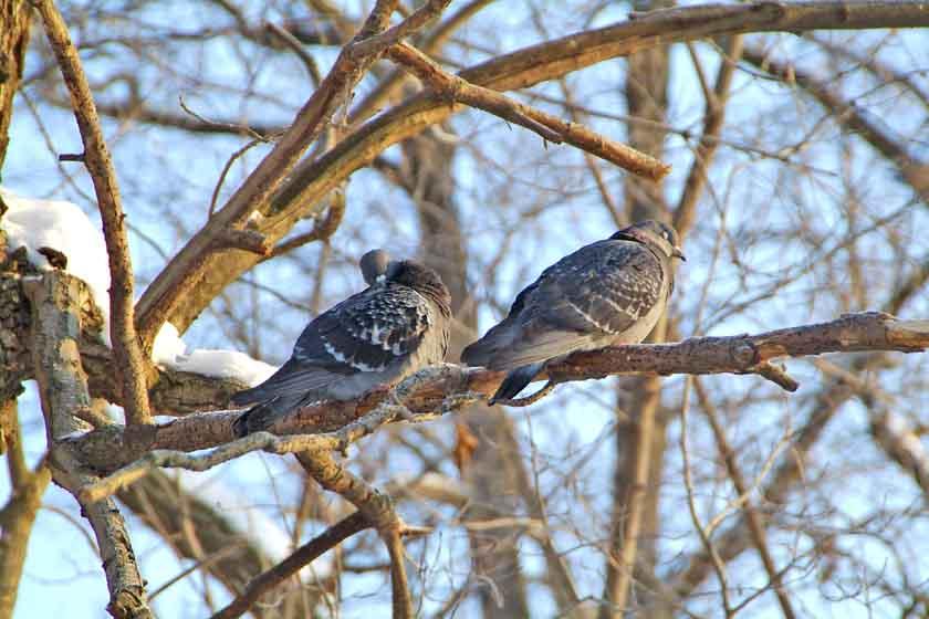 http://ecostory-tour.ru/BirdWatching.Ru/Zimovka/SizariTojyePticw.jpg