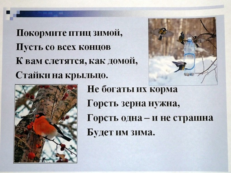 http://mdou78.edu.yar.ru/data/images/316_w800_h600.JPG
