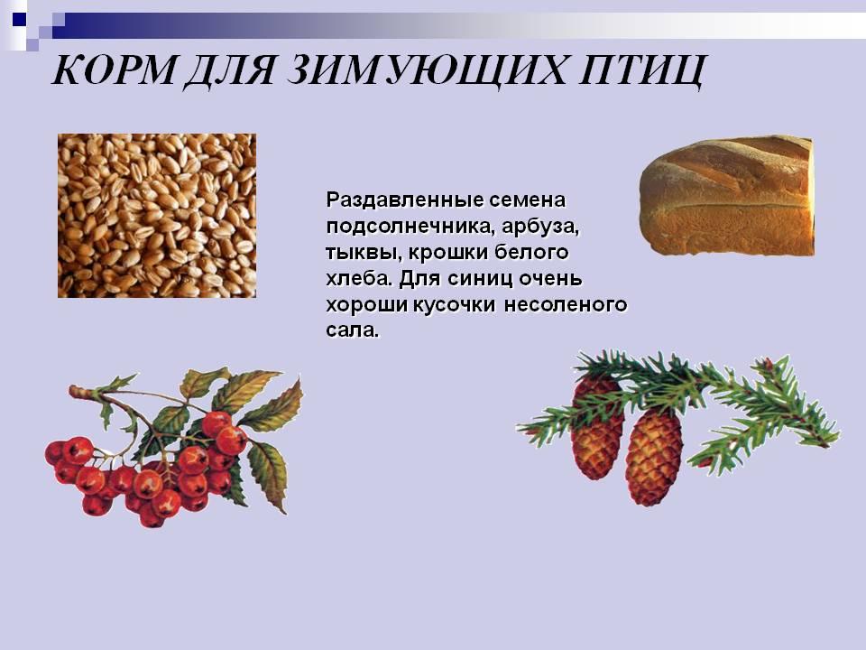 http://900igr.net/datas/okruzhajuschij-mir/Pereletnye-i-zimujuschie/0016-016-Korm-dlja-zimujuschikh-ptits.jpg