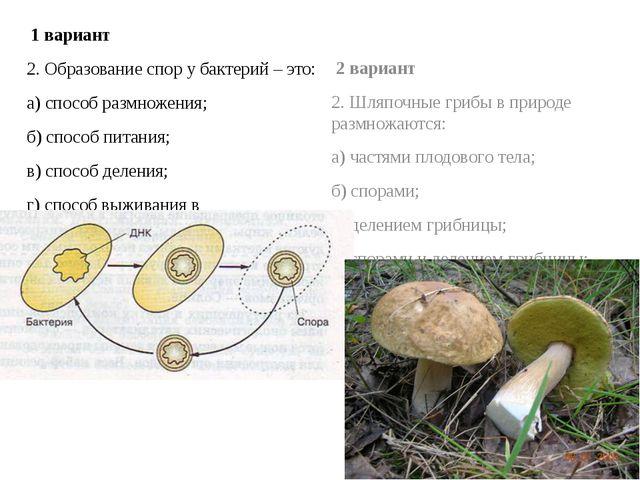 1 вариант 2. Образование спор у бактерий – это: а) способ размножения; б) сп...