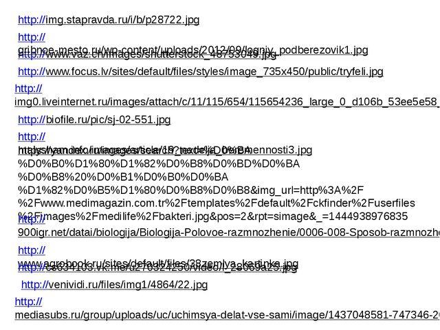 http://www.focus.lv/sites/default/files/styles/image_735x450/public/tryfeli.j...