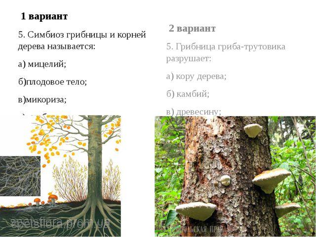 1 вариант 5. Симбиоз грибницы и корней дерева называется: а) мицелий; б)плод...