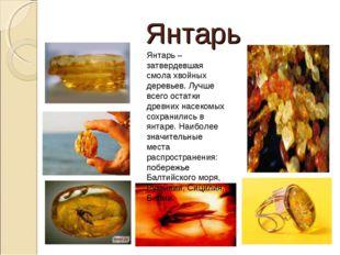 Янтарь Янтарь – затвердевшая смола хвойных деревьев. Лучше всего остатки древ