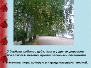 У берёзки, рябины, дуба. ивы и у других деревьев появляются веточки яркими з