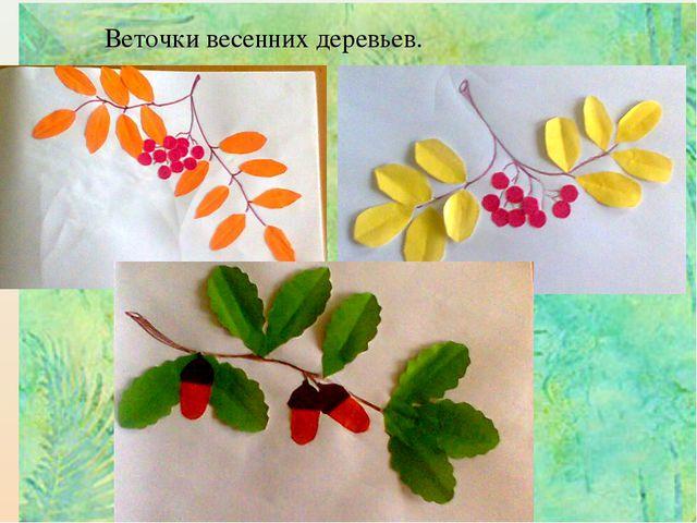 Веточки весенних деревьев.
