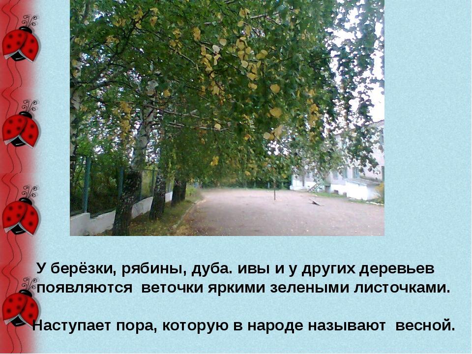 У берёзки, рябины, дуба. ивы и у других деревьев появляются веточки яркими з...