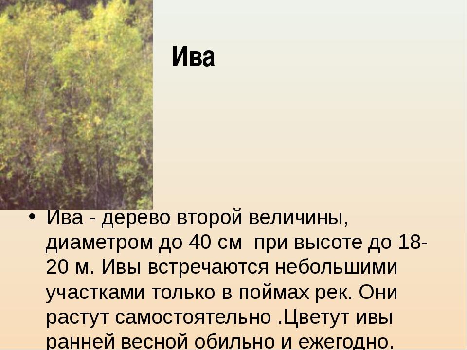 Ива Ива - дерево второй величины, диаметром до 40 см при высоте до 18-20 м. И...