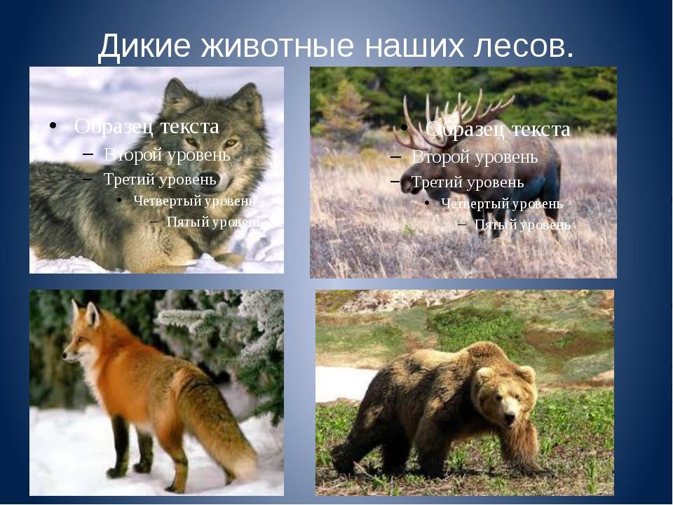 Дикие животные наших лесов.