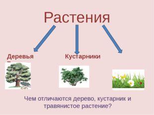 Растения Деревья Кустарники Травы Чем отличаются дерево, кустарник и травянис