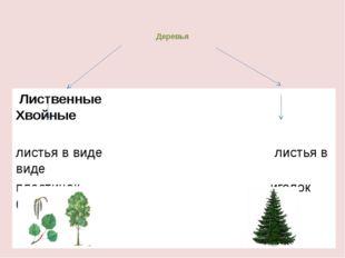 Деревья Лиственные Хвойные листья в виде листья в виде пластинок иголок ( хво