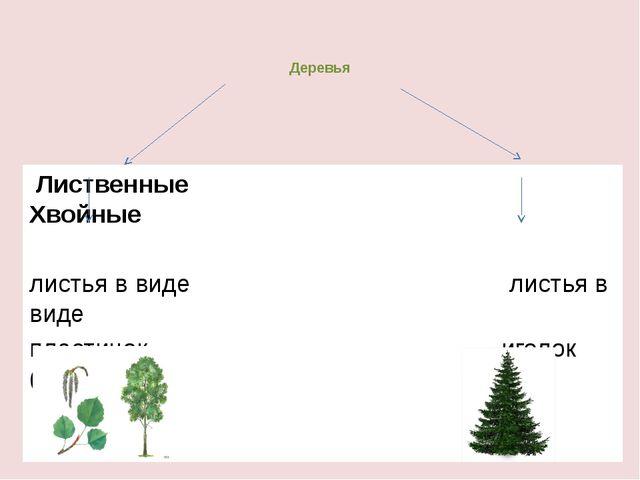 Деревья Лиственные Хвойные листья в виде листья в виде пластинок иголок ( хво...