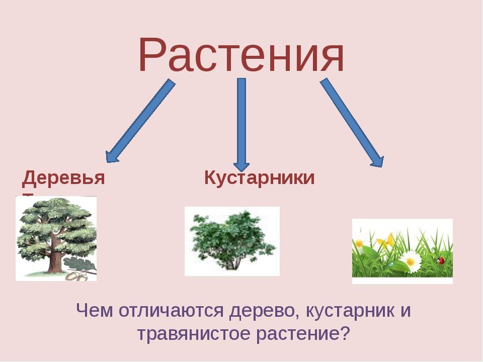 Растения Деревья Кустарники Травы Чем отличаются дерево, кустарник и травянис...