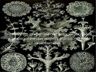 Лишайник-это симбиотические ассоциации грибов и микроскопических зелёных вод