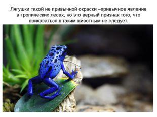 Лягушки такой не привычной окраски –привычное явление в тропических лесах, но
