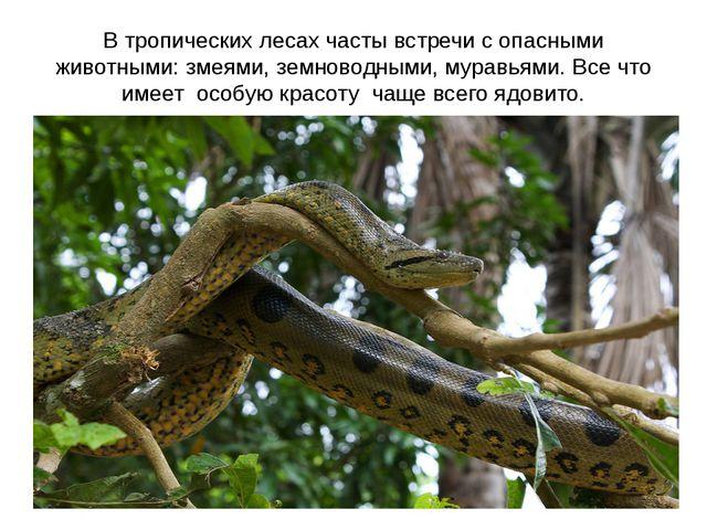 В тропических лесах часты встречи с опасными животными: змеями, земноводными,...