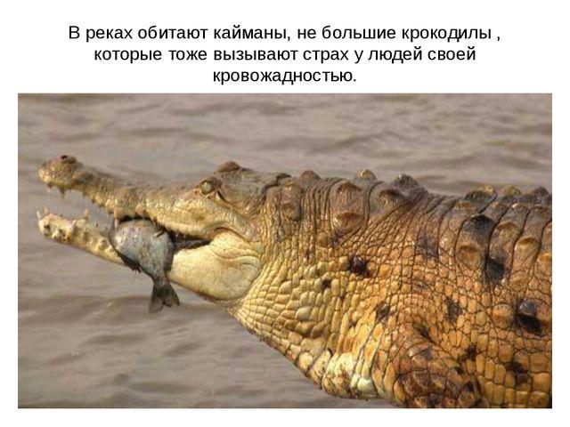 В реках обитают кайманы, не большие крокодилы , которые тоже вызывают страх у...