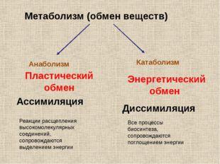 Метаболизм (обмен веществ) Анаболизм Пластический обмен Ассимиляция Реакции р