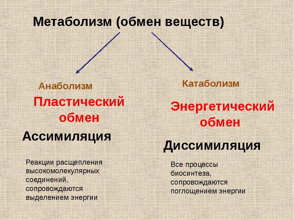 Метаболизм (обмен веществ) Анаболизм Пластический обмен Ассимиляция Реакции р...