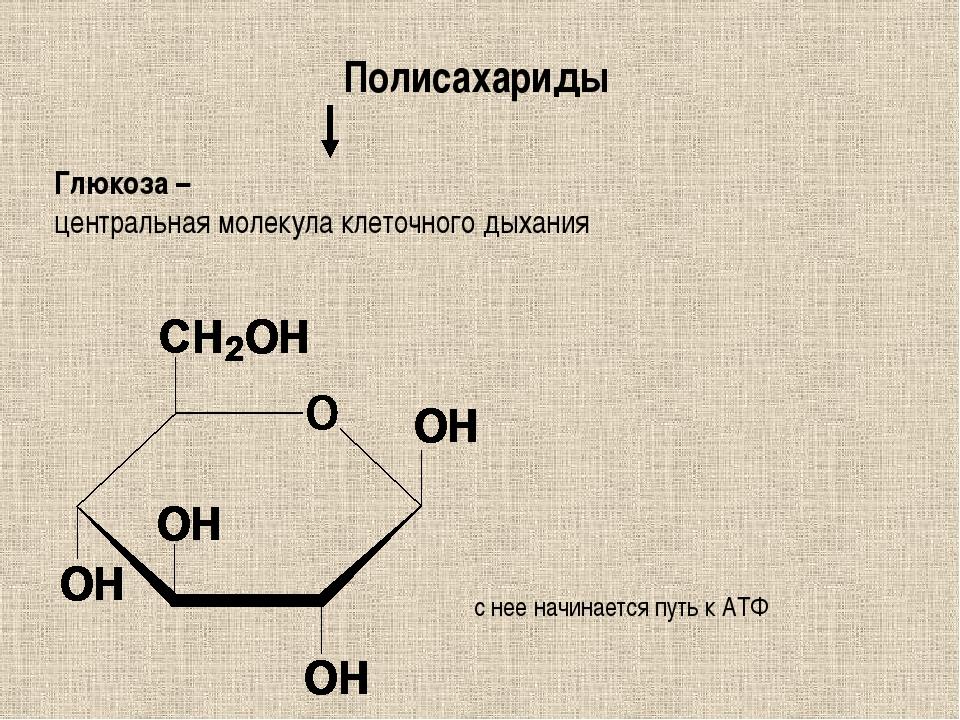Полисахариды Глюкоза – центральная молекула клеточного дыхания с нее начинает...