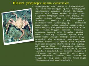 Шаянтәрізділерге жалпы сипаттама: Шаянтәрізділер (лат.Crustacea) — буынаяқ