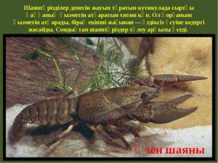 Шаянтәрізділер денесін жауып тұратын кутикулада сыртқы қаңқаның қызметін атқа