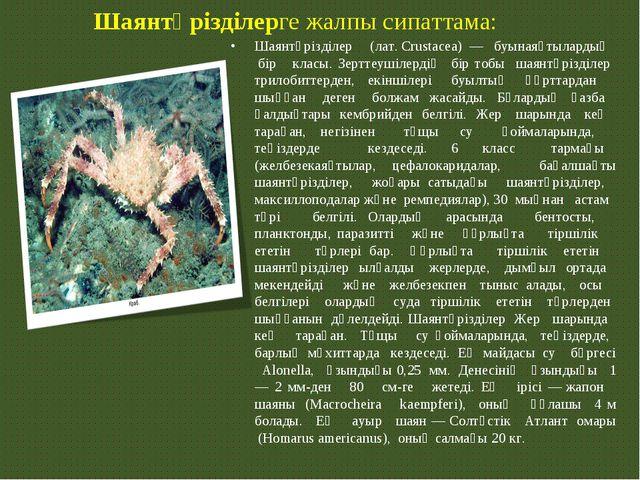 Шаянтәрізділерге жалпы сипаттама: Шаянтәрізділер (лат.Crustacea) — буынаяқ...