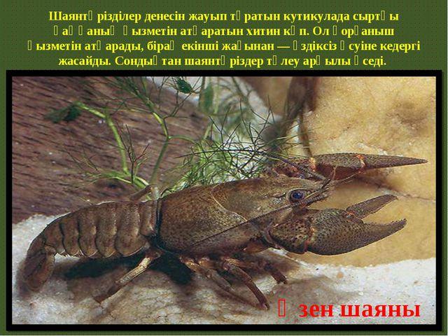 Шаянтәрізділер денесін жауып тұратын кутикулада сыртқы қаңқаның қызметін атқа...