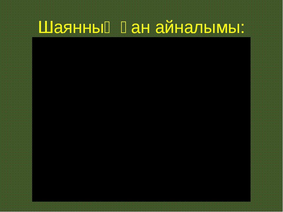 Шаянның қан айналымы: