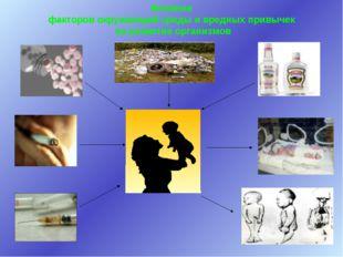 Влияние факторов окружающей среды и вредных привычек на развитие организмов