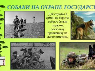 СОБАКИ НА ОХРАНЕ ГОСУДАРСТВА Для службы в армии не берутся собак с белым окра
