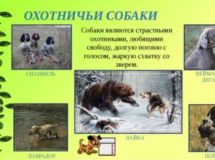ОХОТНИЧЬИ СОБАКИ СПАНИЕЛЬ ПОЙНТЕР ЛАБРАДОР ВЕЙМАРСКАЯ ЛЕГАВАЯ Собаки являются