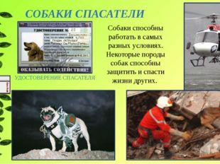 СОБАКИ СПАСАТЕЛИ УДОСТОВЕРЕНИЕ СПАСАТЕЛЯ Собаки способны работать в самых раз