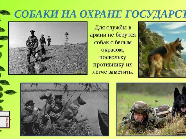 СОБАКИ НА ОХРАНЕ ГОСУДАРСТВА Для службы в армии не берутся собак с белым окра...