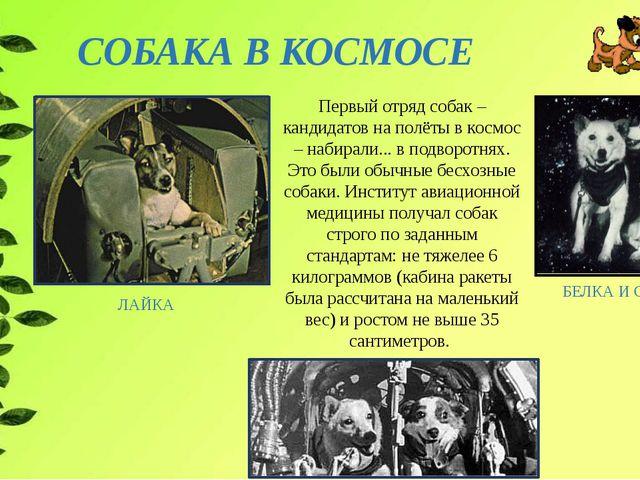 СОБАКА В КОСМОСЕ БЕЛКА И СТРЕЛКА ЛАЙКА Первый отряд собак – кандидатов на пол...