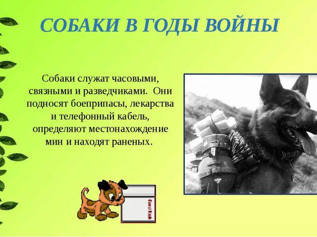 СОБАКИ В ГОДЫ ВОЙНЫ Собаки служат часовыми, связными и разведчиками. Они подн...