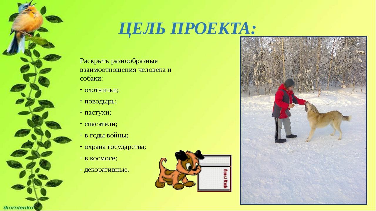 ЦЕЛЬ ПРОЕКТА: Раскрыть разнообразные взаимоотношения человека и собаки: охотн...