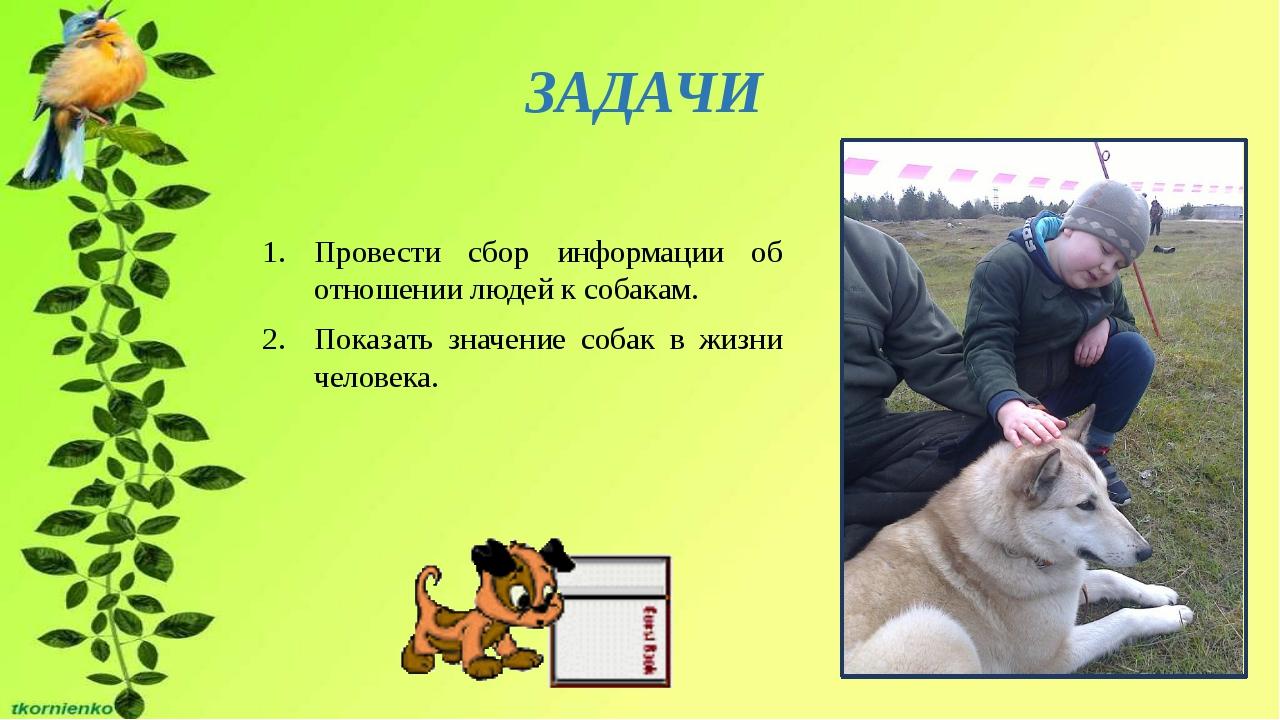 Провести сбор информации об отношении людей к собакам. Показать значение соба...