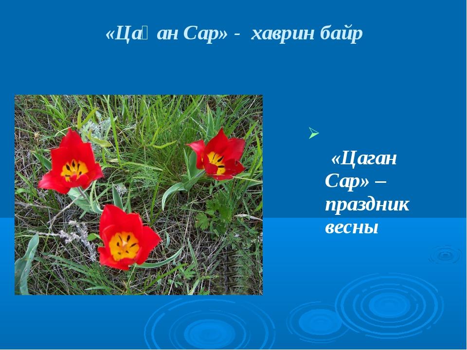 «Цаган Сар» – праздник весны «Цаһан Сар» - хаврин байр